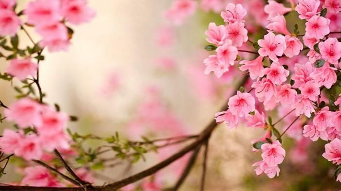 fonds-d'écran-printemps-fond-d'écran-gratuit-printemps-fond-d'écran-fleurs-fonds-d'écran-printemps-fond-d'écran-gratuit-printemps-