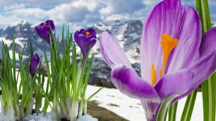 fonds-d'écran-printemps-fond-d'écran-gratuit-printemps-fond-d'écran-maya
