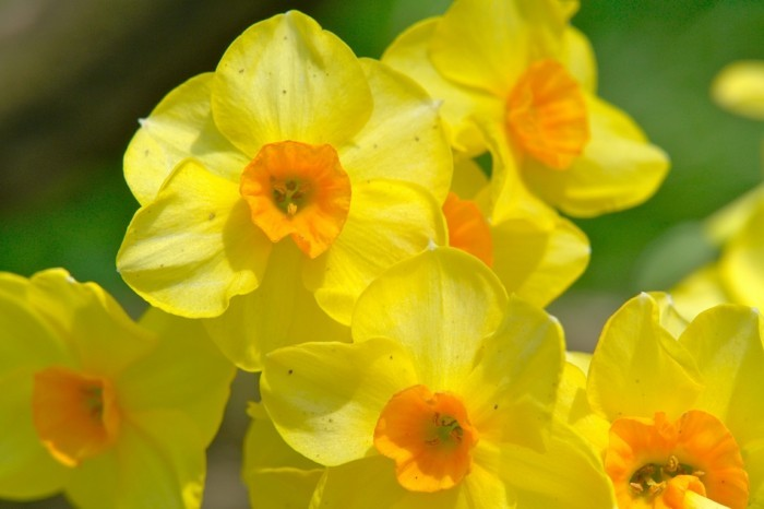 fonds-d'écran-printemps-fond-d'écran-gratuit-printemps-fond-d'écran-printemps