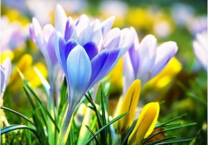 fonds-d'écran-printemps-fond-d'écran-gratuit-printemps-fond-ecran-fleur