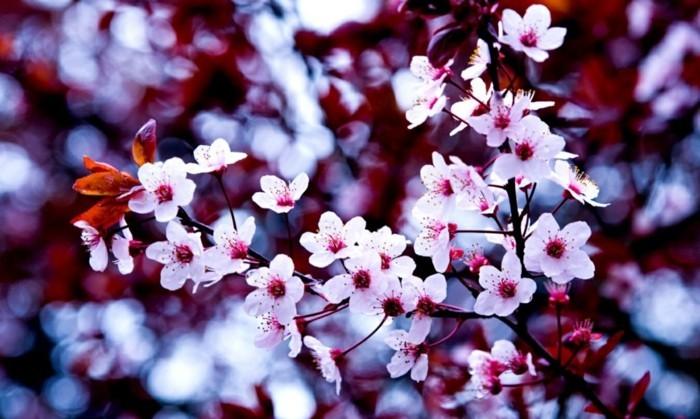 fonds-d'écran-printemps-fond-d'écran-gratuit-printemps-fond-ecran-gratuit-printemps