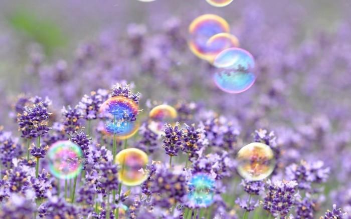 fonds-d'écran-printemps-fond-d'écran-gratuit-printemps-fonds-d'écran-fleur