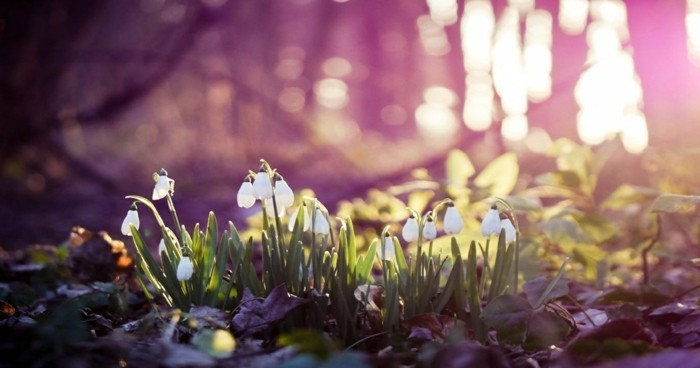fonds-d'écran-printemps-fond-d'écran-gratuit-printemps-fonds-d'écran-fleurs