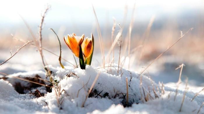 fonds-d'écran-printemps-fond-ecran-gratuit-printemps-fond-d'écran-ete