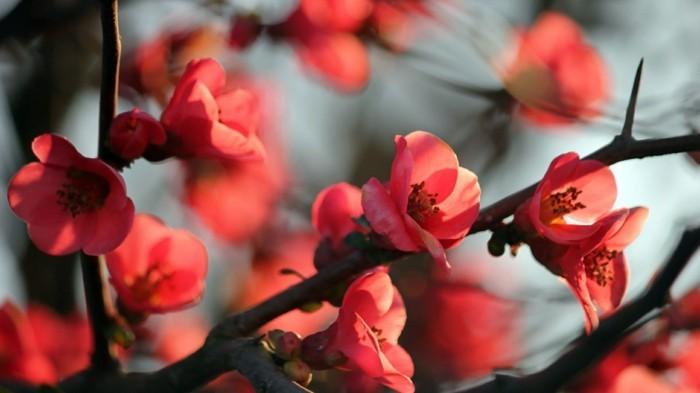 fonds-d'écran-printemps-fond-ecran-gratuit-printemps-fond-d'écran-fleurs