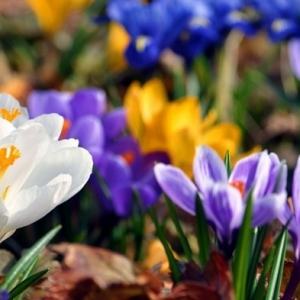 Fonds d'écran printemps qui vont inspirer votre journée!