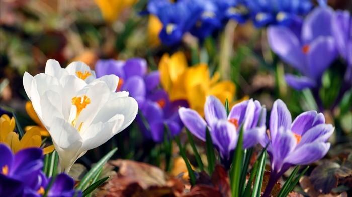 fonds-d'écran-printemps-fond-ecran-gratuit-printemps-fond-d'écran-printemps-gratuit
