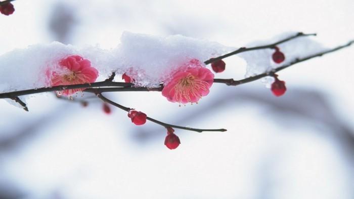 fonds-d'écran-printemps-fond-ecran-gratuit-printemps-fond-d'écran-rose