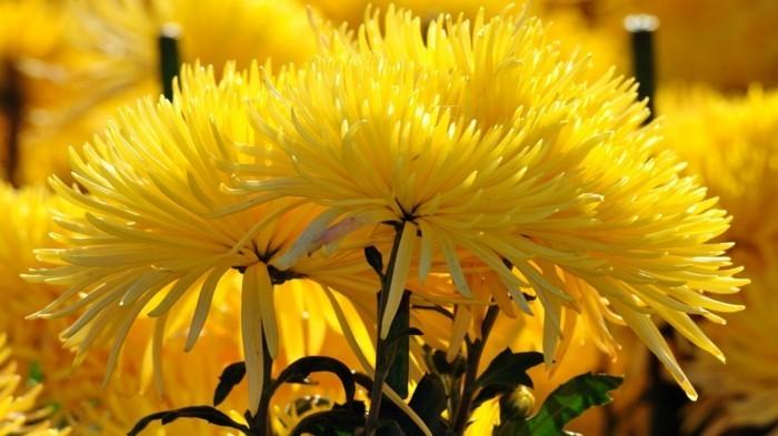 fonds-d'écran-printemps-fond-ecran-gratuit-printemps-fond-ecran-printemps