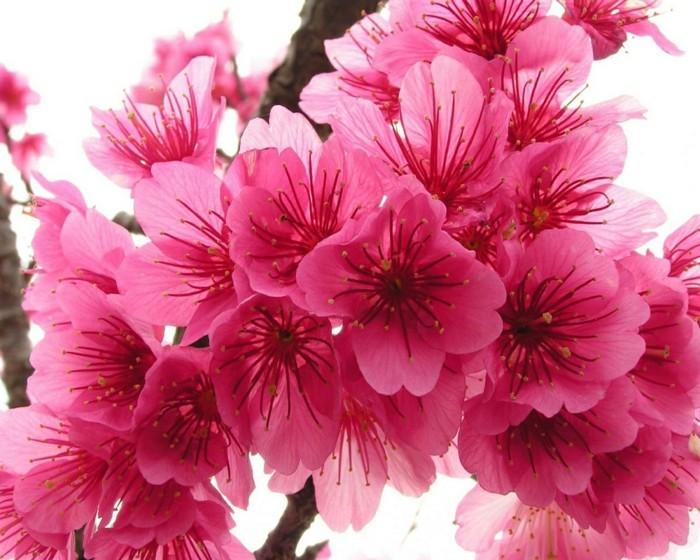 fonds-d'écran-printemps-fond-ecran-gratuit-printemps-paysages-de-printemps