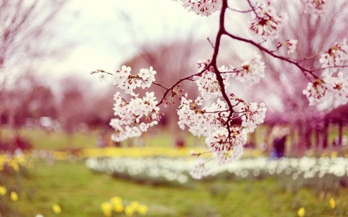 fonds-d'écran-printemps-fonds-d'écran-été-fleurs-fond-d'écran
