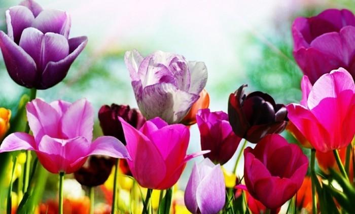 fonds-d'écran-printemps-fonds-d'écran-été-fond-d'écran-fleur