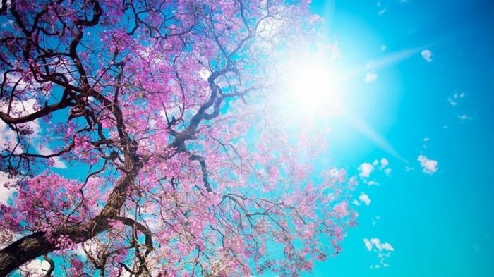 fonds-d'écran-printemps-fonds-d'écran-été-fond-d'écran-fleurs-gratuit