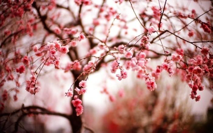 fonds-d'écran-printemps-fonds-d'écran-été-fond-d'écran-fleurs