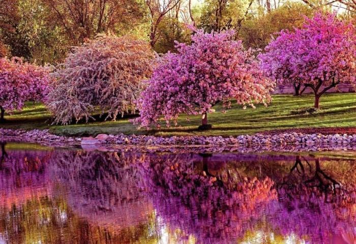 fonds-d'écran-printemps-fonds-d'écran-été-fond-d'écran-paysage-printemps-gratuit