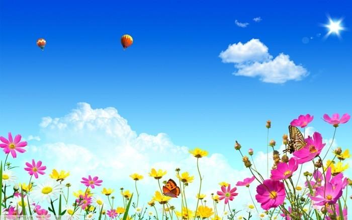 fonds-d'écran-printemps-fonds-d'écran-été-fond-d'ecran-fleur