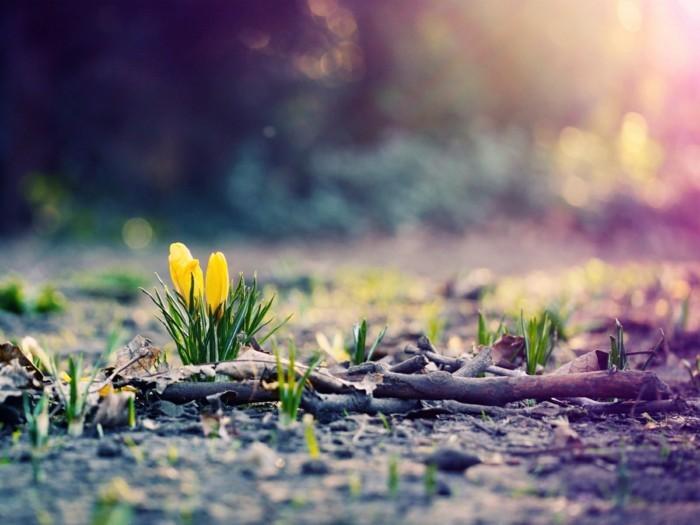 fonds-d'écran-printemps-fonds-d'écran-été-fond-d'ecran-printemps