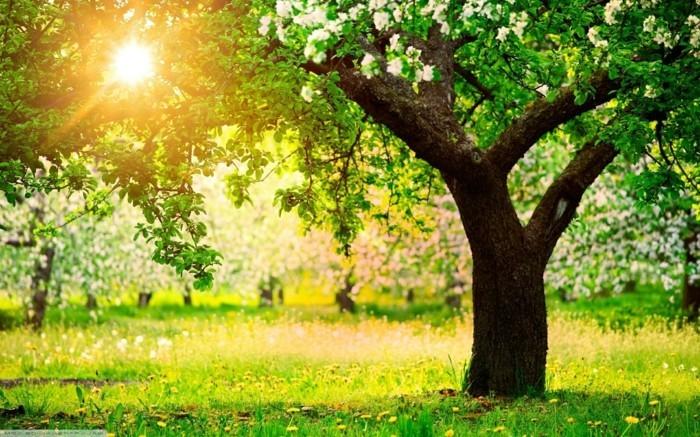 fonds-d'écran-printemps-fonds-d'écran-été-fond-ecran-fleur