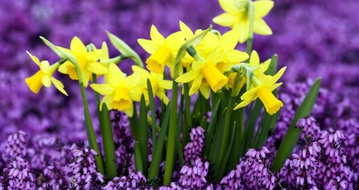 Fonds d 39 cran printemps qui vont inspirer votre journ e for Fond ecran ete fleurs