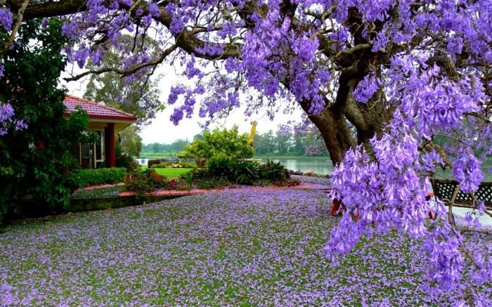 fonds-d'écran-printemps-fonds-d'écran-été-fonds-d'ecran-fleurs