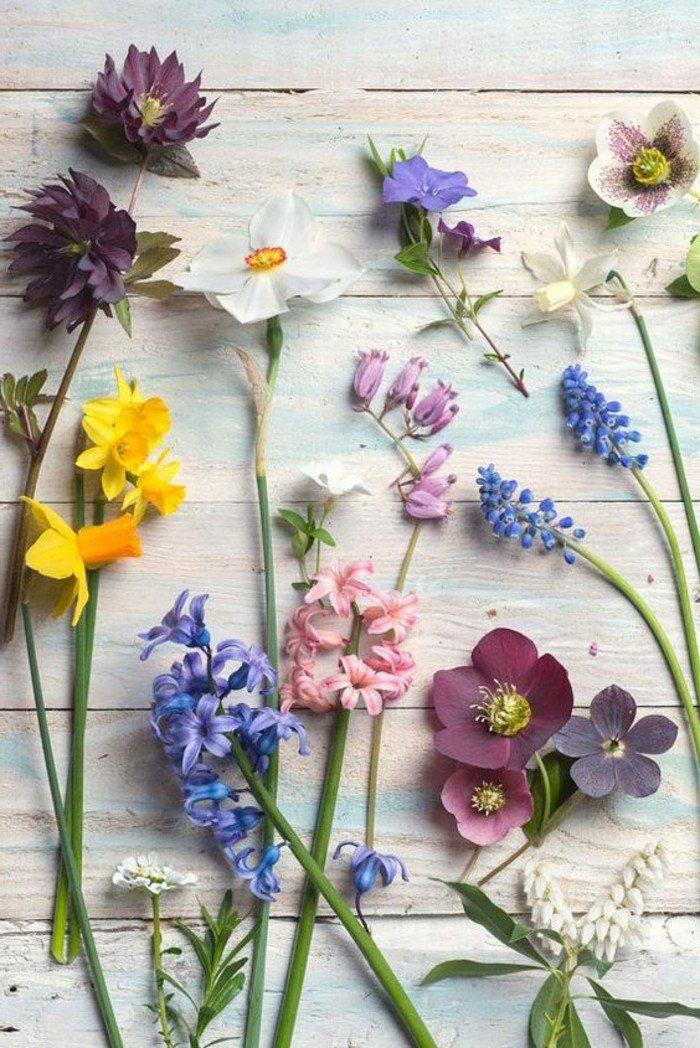 image-beauté-des-fleurs-violettes-les-plus-belles-images-du-monde-inspiration
