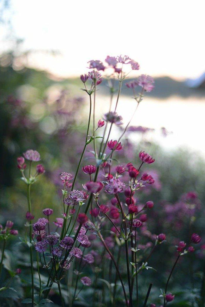 image-des-fleurs-violettes-les-plus-belles-images-du-monde-inspiration