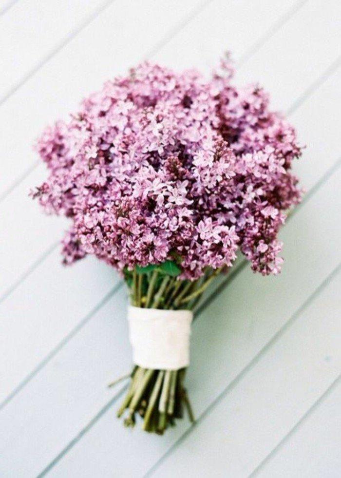 image-photo-fleurs-violettes-les-plus-belles-images-du-monde-inspiration