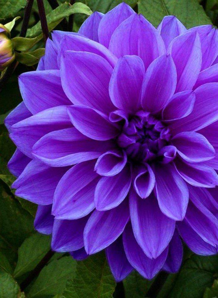 inspiration-beauté-photographie-nature-et-fleurs-belle-image-fleurie