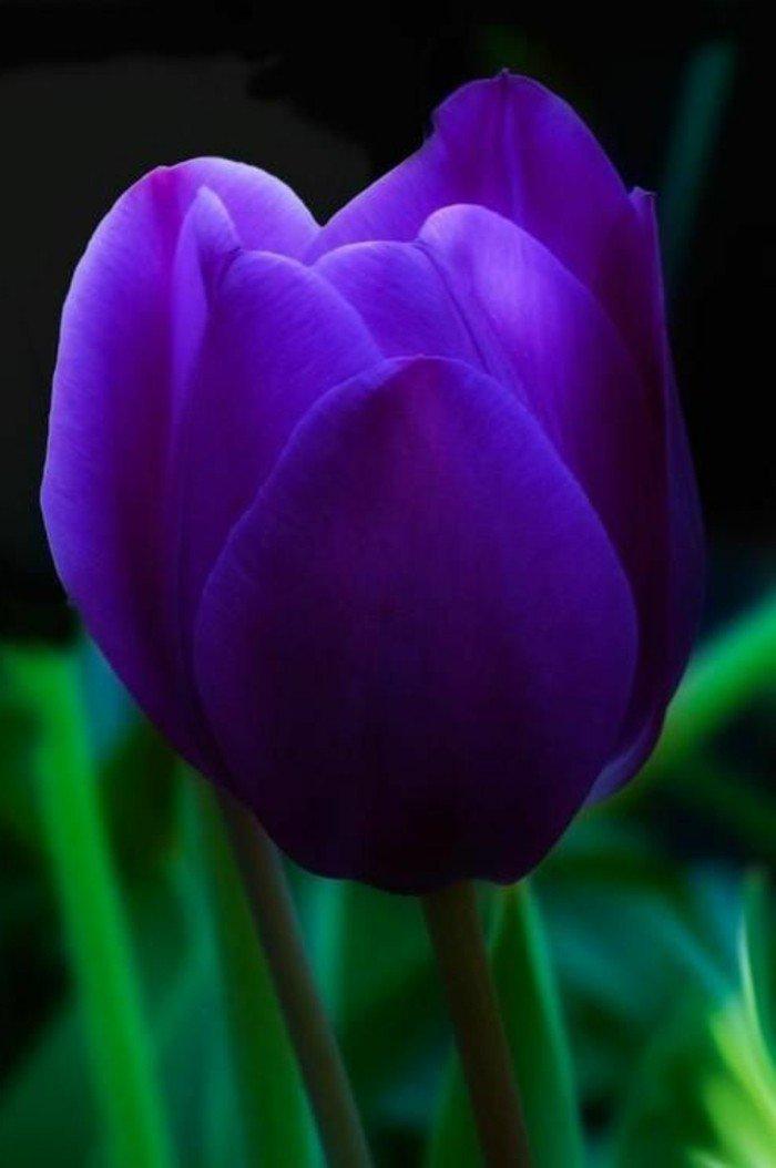 inspiration-photographie-admirable-nature-et-fleurs-belle-image-fleurie