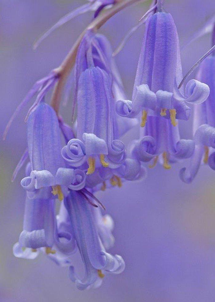 inspiration-photographie-nature-et-fleurs-belle-image-fleurie-violet-claire