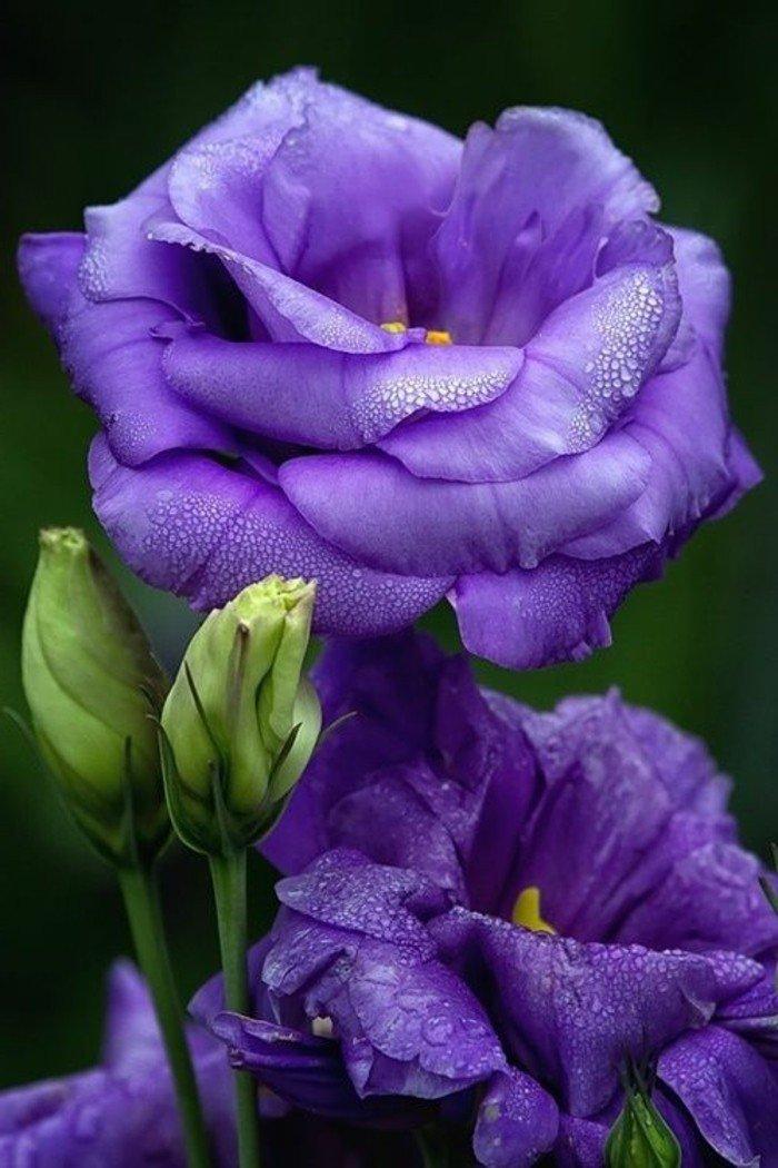 interéressant-photo-de-fleur-violet-jardin