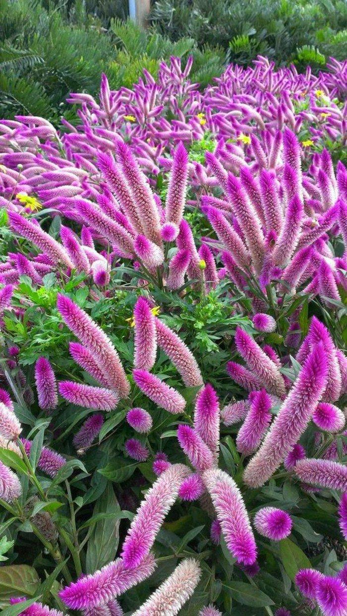 jardin-fleur-rose-violet-cool-image-bouche-exotique