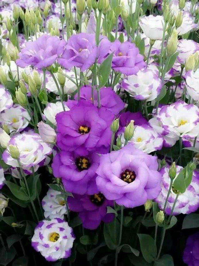 jardin-qu-on-aime-fleurs-blanches-et-violettes-exterieur