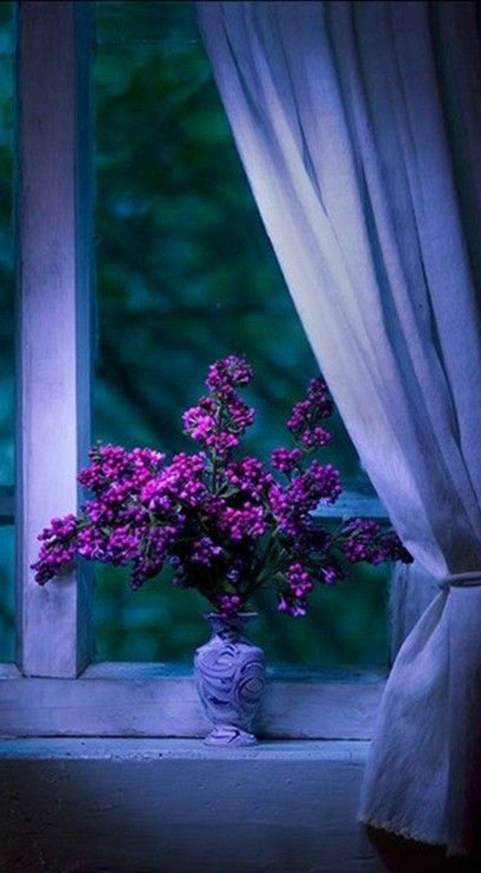 la-beauté-de-la-nature-fleure-violette-fleurs-violettes-vivaces-vase-fenetre-rideaux