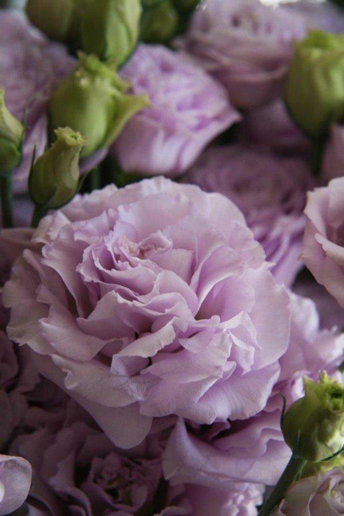 la-belle-nature-fleure-violette-fleurs-violettes-vivaces
