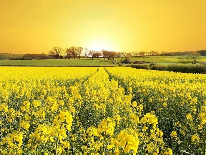 la-photo-jaune-nature-soleil-date-du-printemps-fleurs-de-printemps-une-photographie-jolie