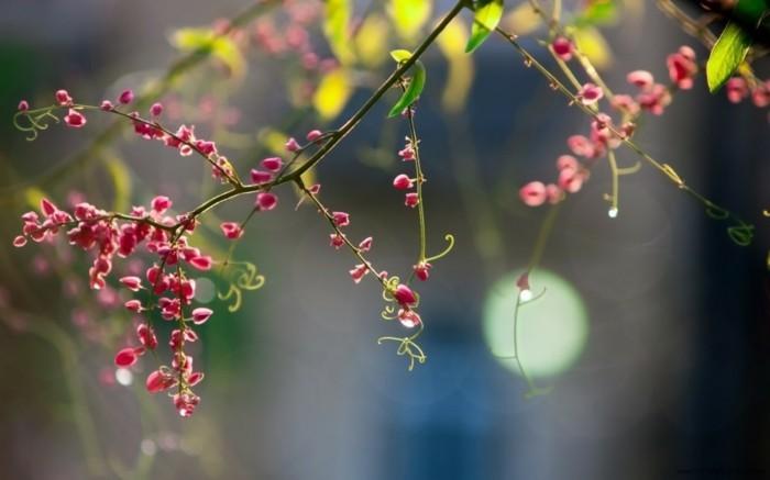 le-fond-d-écran-printemps-coloriage-printemps-formidable-image-roses-arbre-fleurie