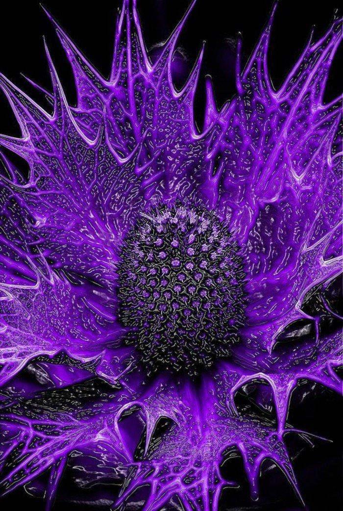 magnifique-fleur-violettes-fleur-la-violette-bouquet-de-violettes-fleurs-misqtique