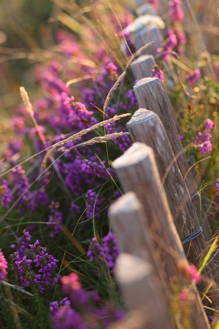 merveilleuse-photo-les-images-des-fleus-les-plus-belles-du-monde-le-fence