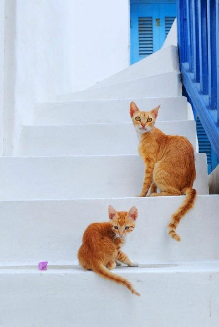 myconos-vacances-en-ile-grèce-trop-cool-en-europe-chatons