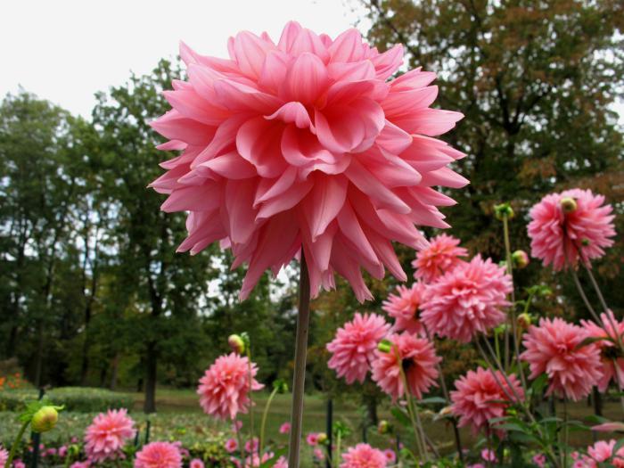 Parc Floral Bois De Vincennes - Le parc floral de Vincennes uneévasion verte tout pr u00e8s de Paris Archzine fr