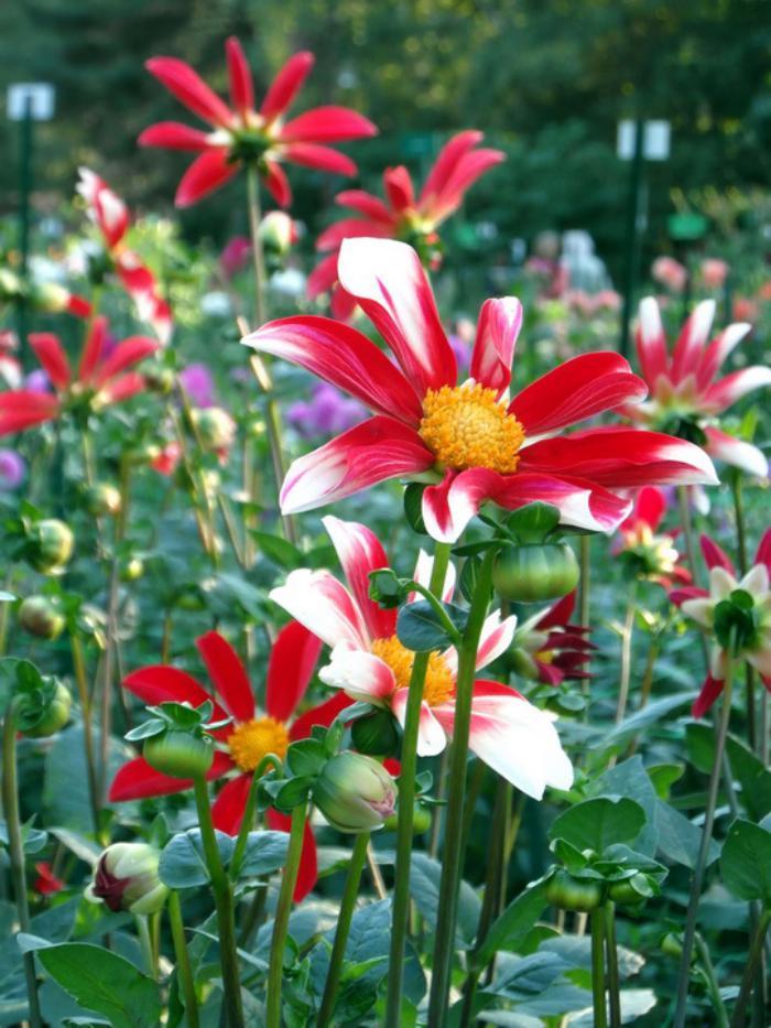 parc-floral-de-vincennes-jardins-et-parterres-fleuris-au-bois-de-Vincenne
