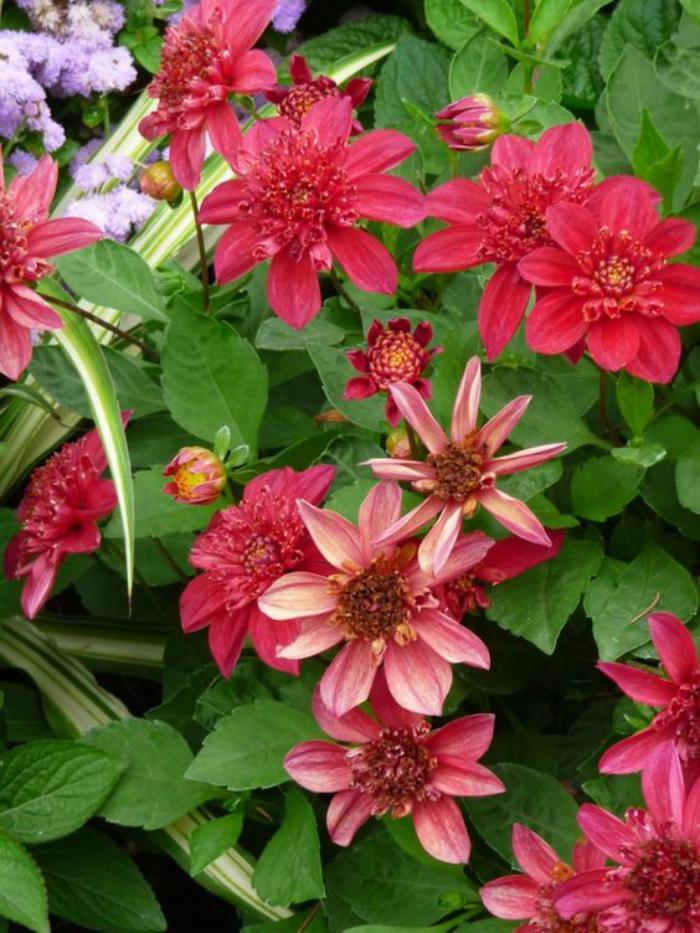 parc-floral-de-vincennes-jolies-fleurs-dans-la-forêt-de-Vincennes