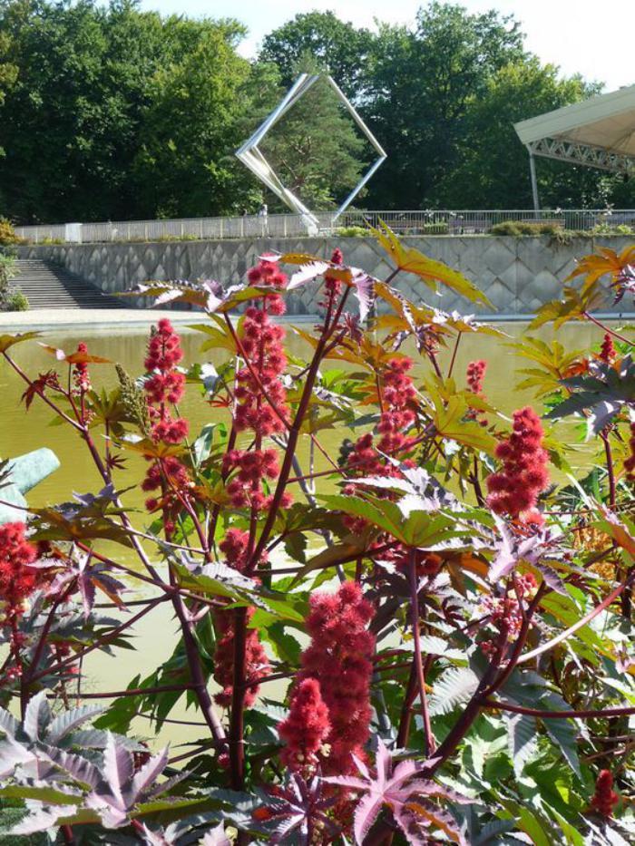 parc-floral-de-vincennes-les-grands-ricins-de-Vincennes