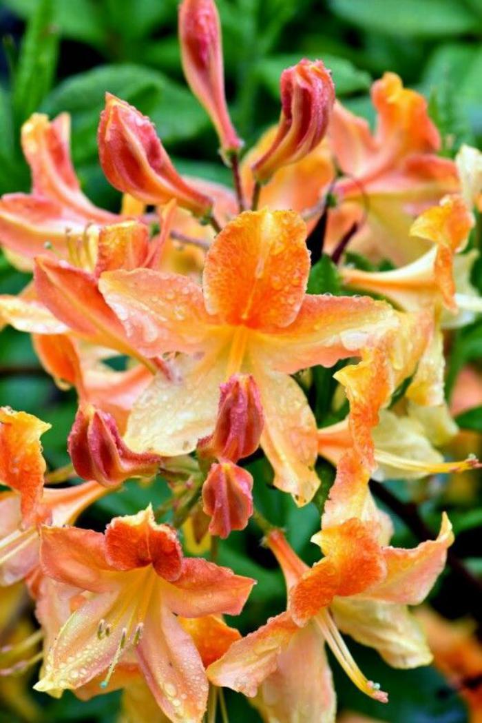 parc-floral-de-vincennes-les-jolies-fleurs-du-parc-vincennes