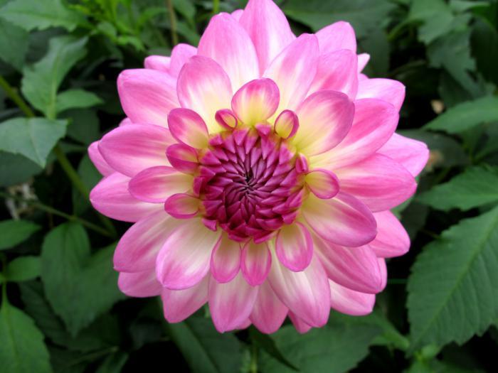 Le parc floral de Vincennes  une évasion verte tout près  ~ Parc Floral Bois De Vincennes