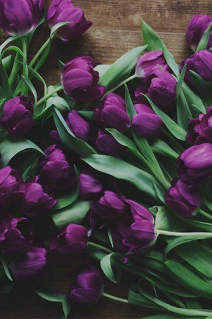 paysage-fleuri-printemps-image-fond-d-écran-trop-jolie-la-nature-