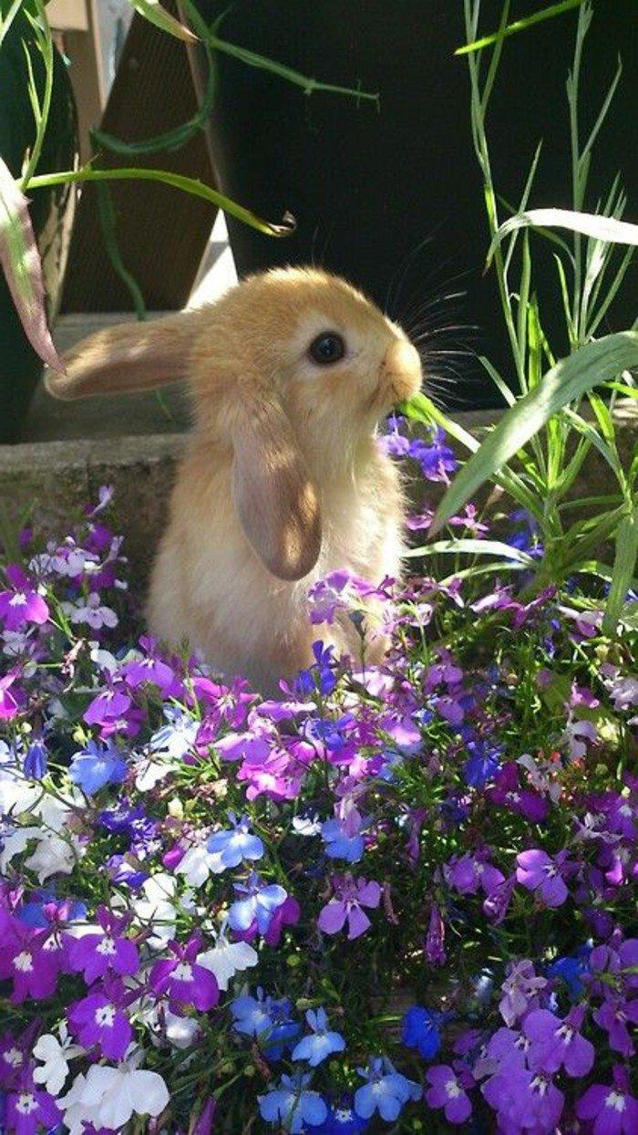 petites-fleurs-violettes-la-violette-fleur-sauvage-nature-image-lapin