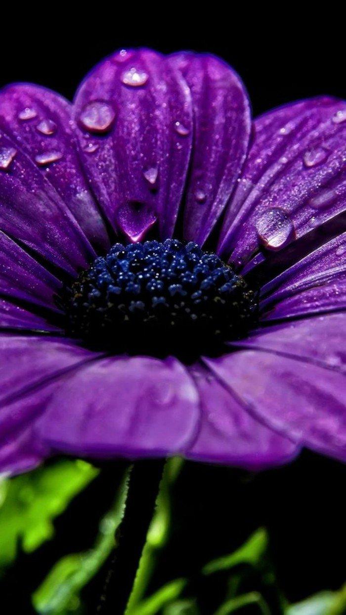 petites-fleurs-violettes-la-violette-fleur-sauvage-nature-image-magnifique