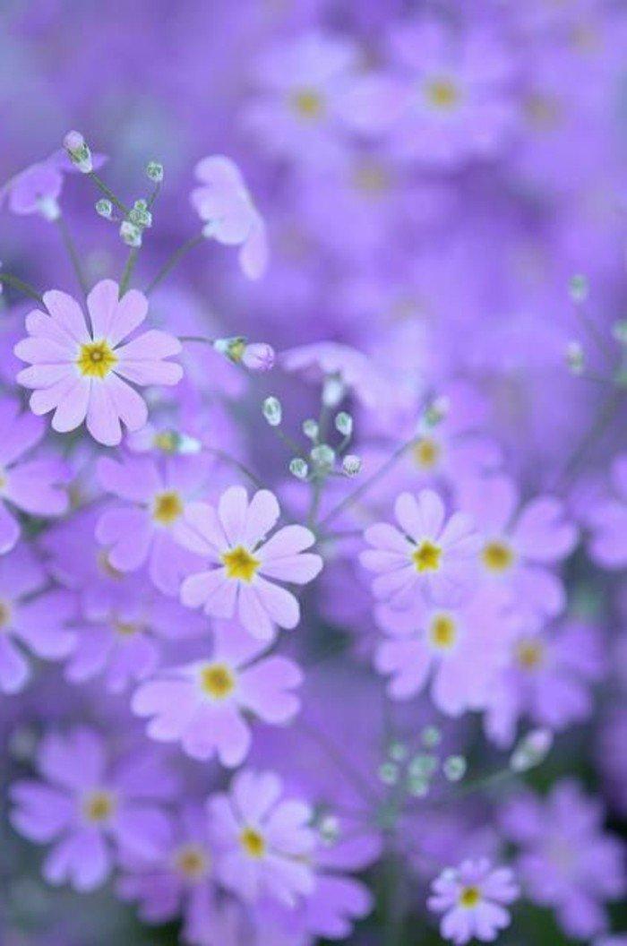 photographie-jolie-la-beauté-de-la-nature-choux-fleur-violet-image-dans-la-foret